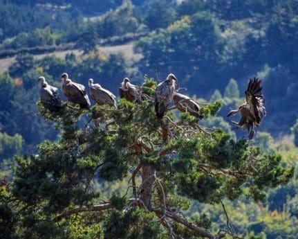 Condor, albero, fauna, natura, cielo, uccello, all'aperto, montagna