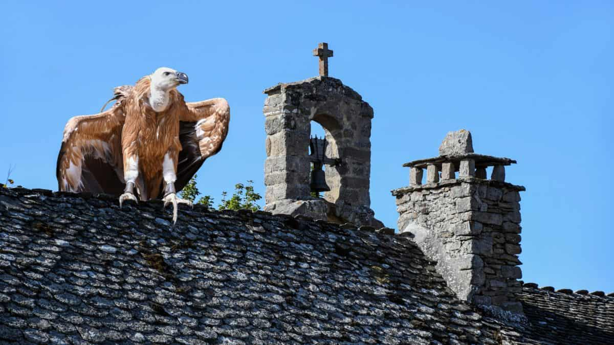 condor, bird, roof, church, bell, sky, old, architecture