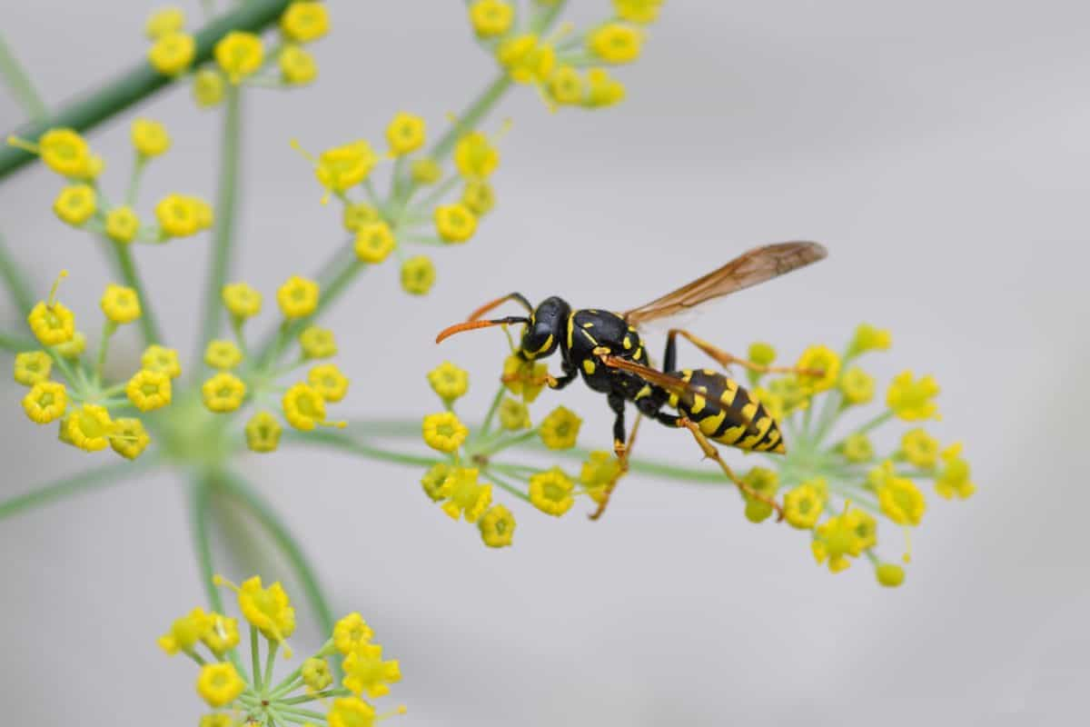flora, flower, insect, nature, wasp, invertebrate, herb, plant