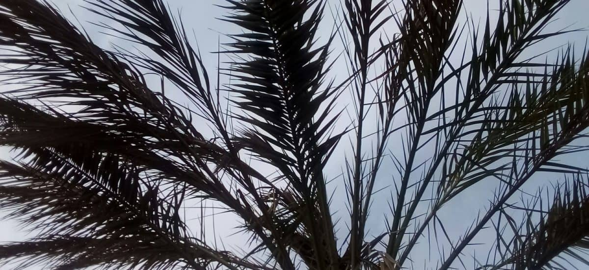 leaf, nature, palm tree, flora, plant, reed, sky, forest, outdoor