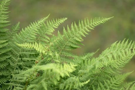 green leaf, nature, wood, fern, summer, flora, plant, tree, forest