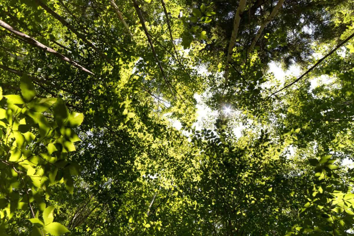 Baum, Landschaft, Zweig, Holz, Blatt, Natur, Umwelt