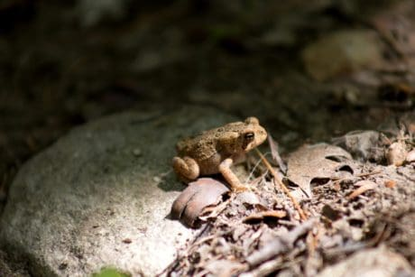 nature, frog, wildlife, amphibian, snake, reptile, ground, stone, shadow