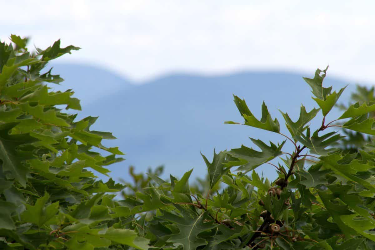 Flora, Garten, Sommer, Natur, Blatt, Ast, Baum, Pflanze