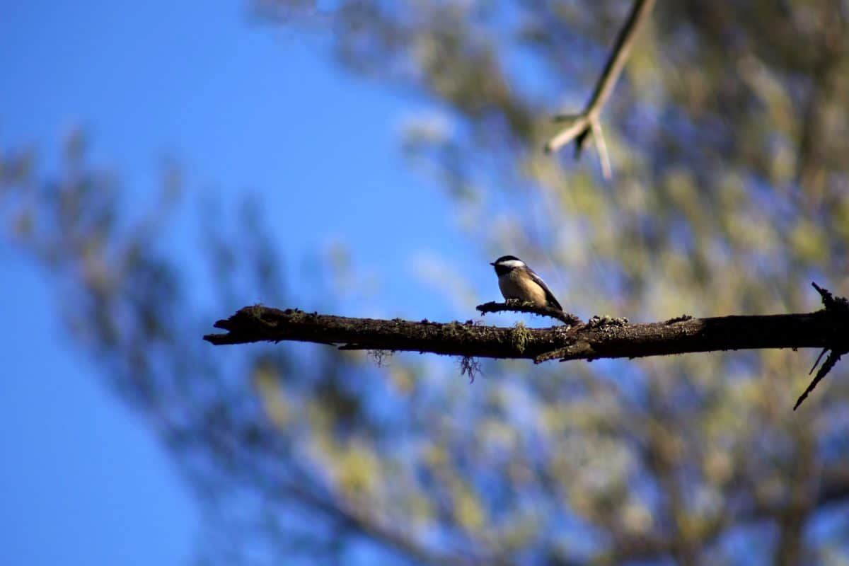 Himmel, Natur, Tierwelt, Baum, Vogel, Schnabel, Federn, Wild, Wirbeltier