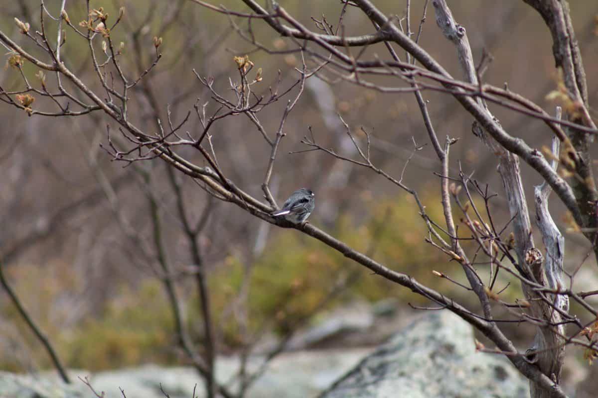 uccello del passero, natura, inverno, albero, fauna selvatica, ramo, all'aperto
