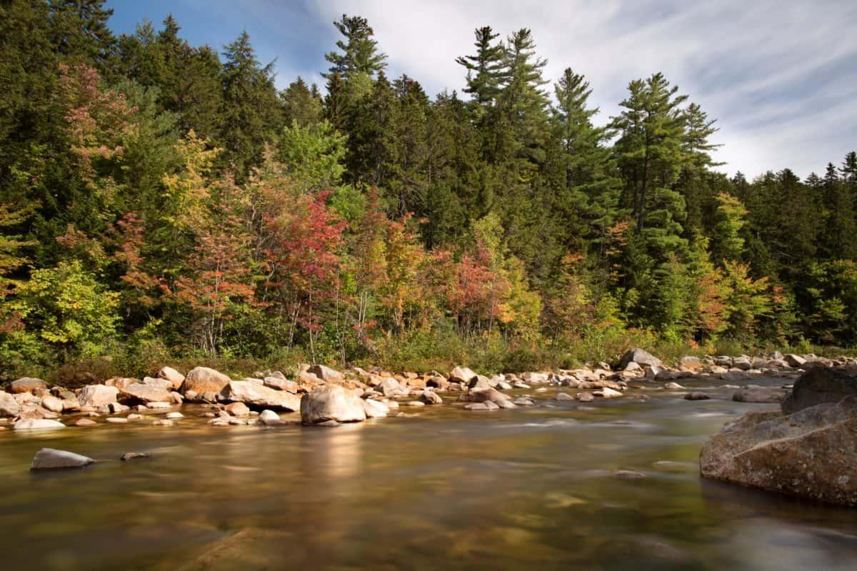 paesaggio, natura, albero, fiume, acqua, legno, foresta, terra