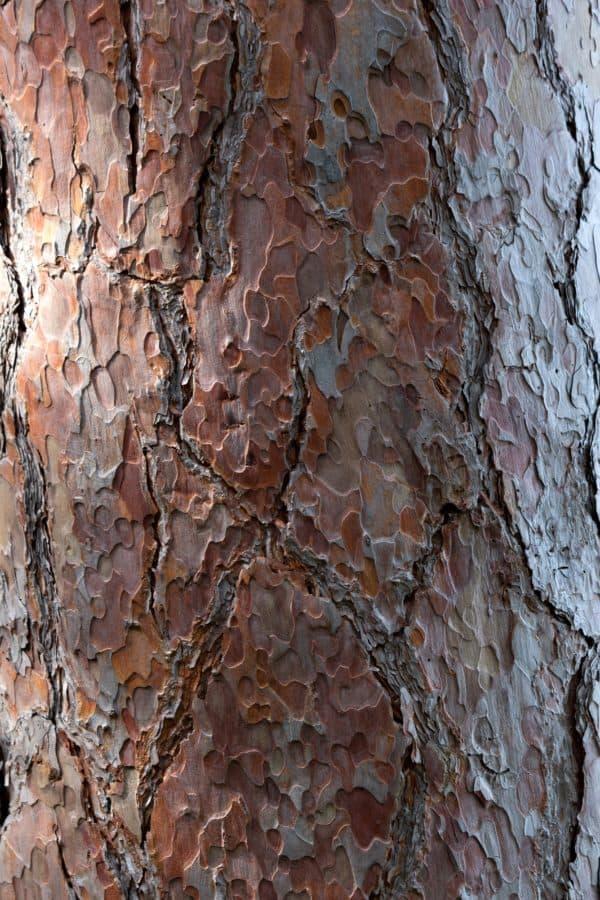 corteza de textura madera, patrón, antiguo, de árboles, material, superficie