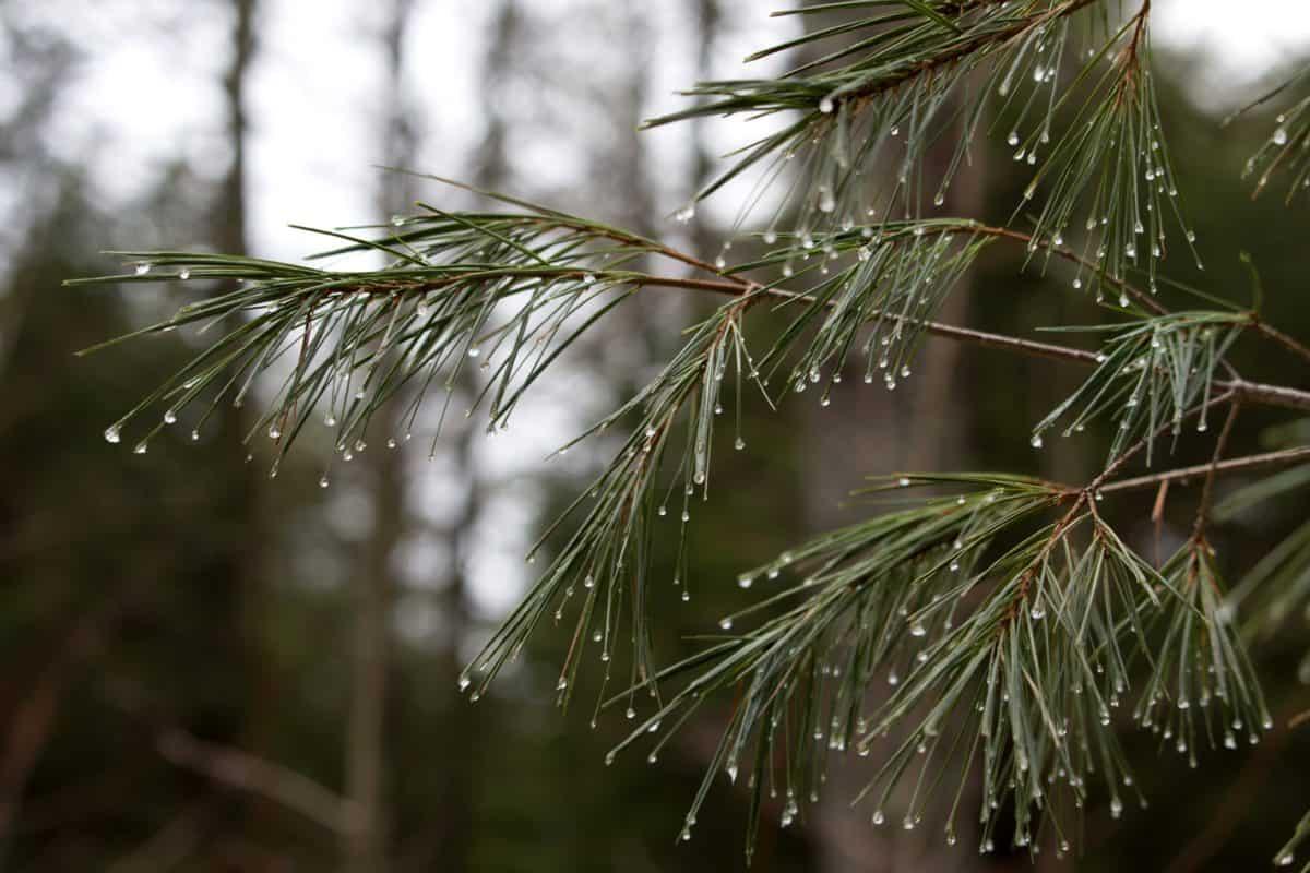 rain, wood, dew, leaf, nature, tree, flora, coconut, palm