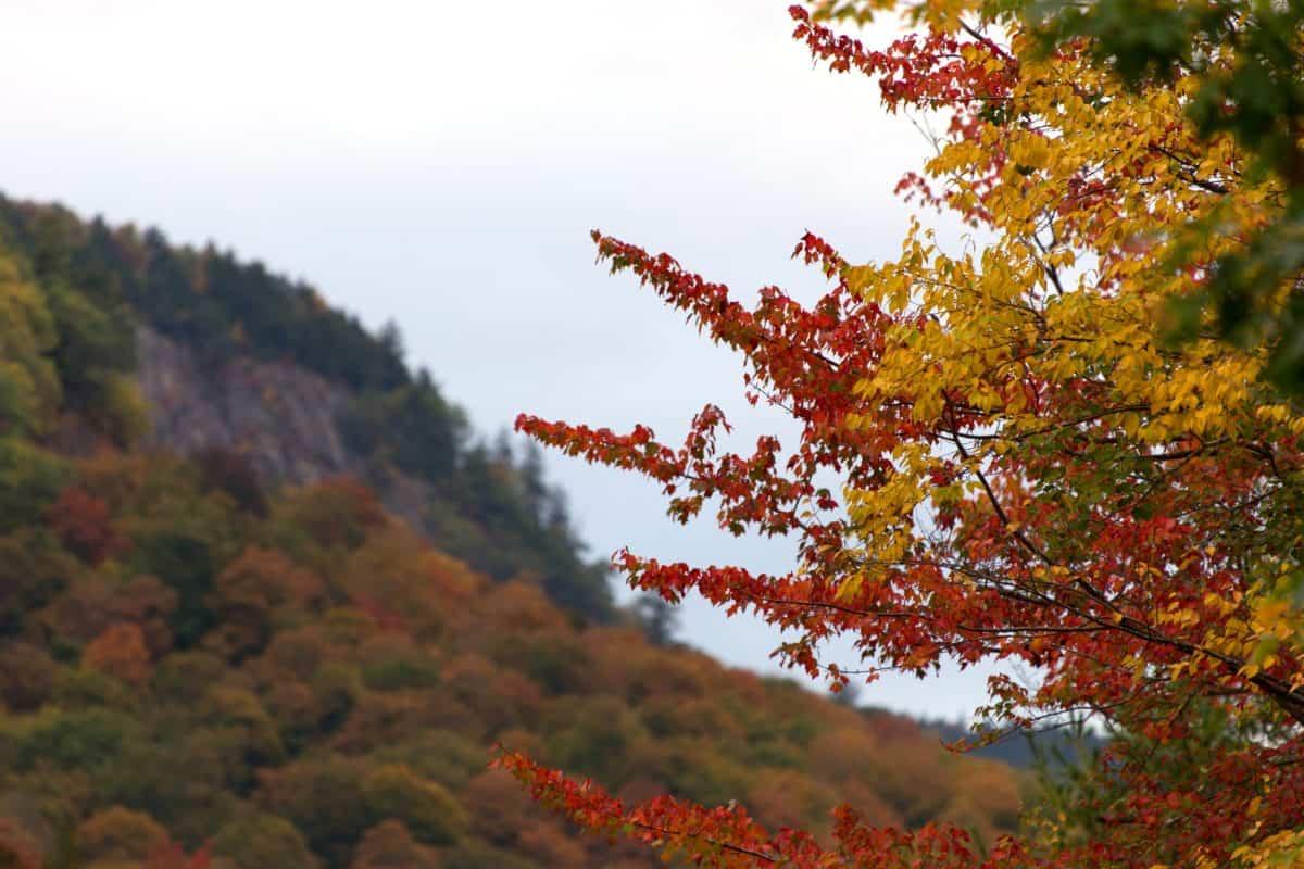дърво, листа, природа, есен, небе, пейзаж, гора, Открит