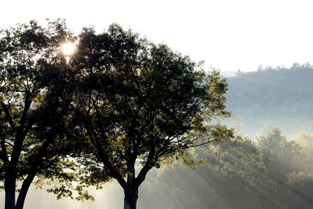 nebbia, nebbia, paesaggio, foglia, alba, natura, legno, sole, albero