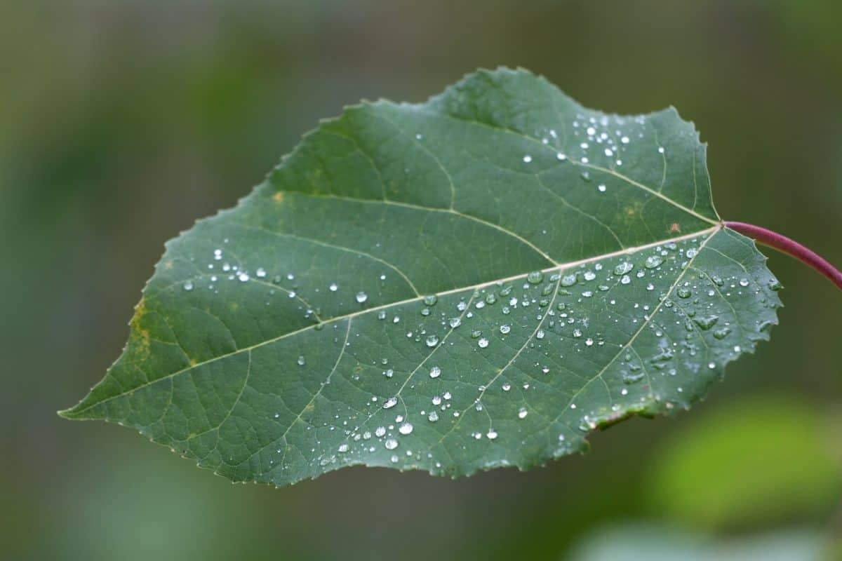 flora, dew, rain, green leaf, nature, tree, plant, foliage