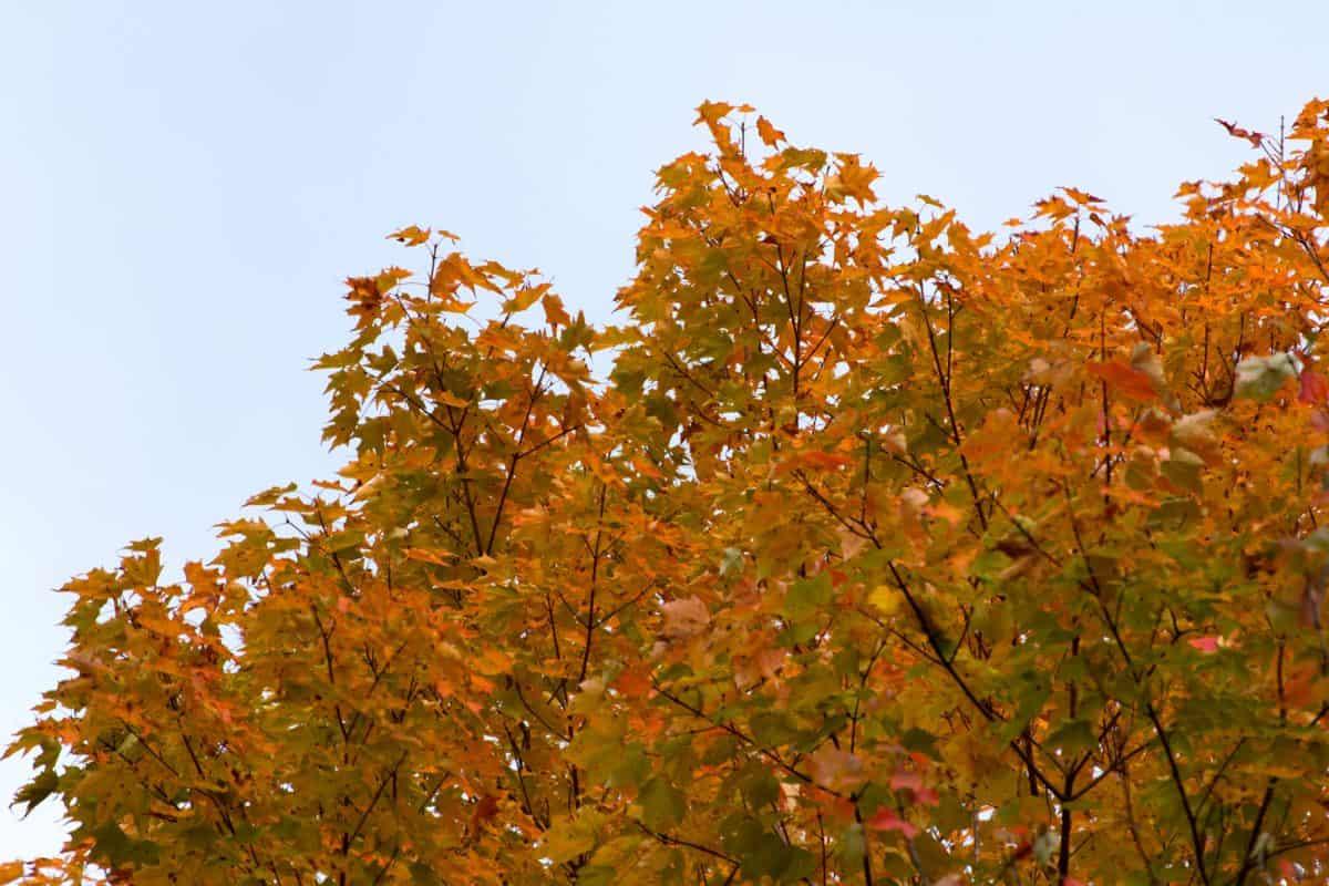 ramo, foglia, albero, natura, pianta, foresta, autunno, cielo, paesaggio, autunno