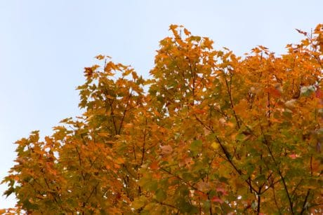 branch, leaf, tree, nature, plant, forest, autumn, sky, landscape, autumn