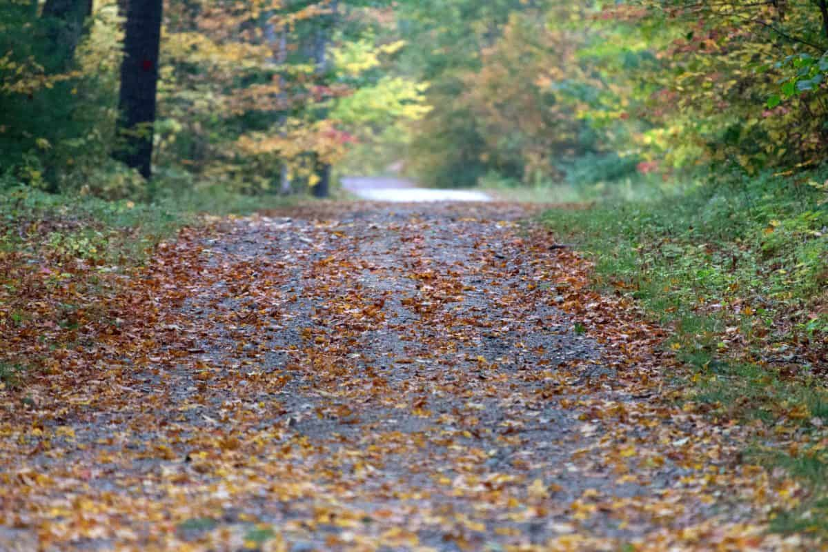 road, landscape, tree, wood, nature, leaf, grass, outdoor