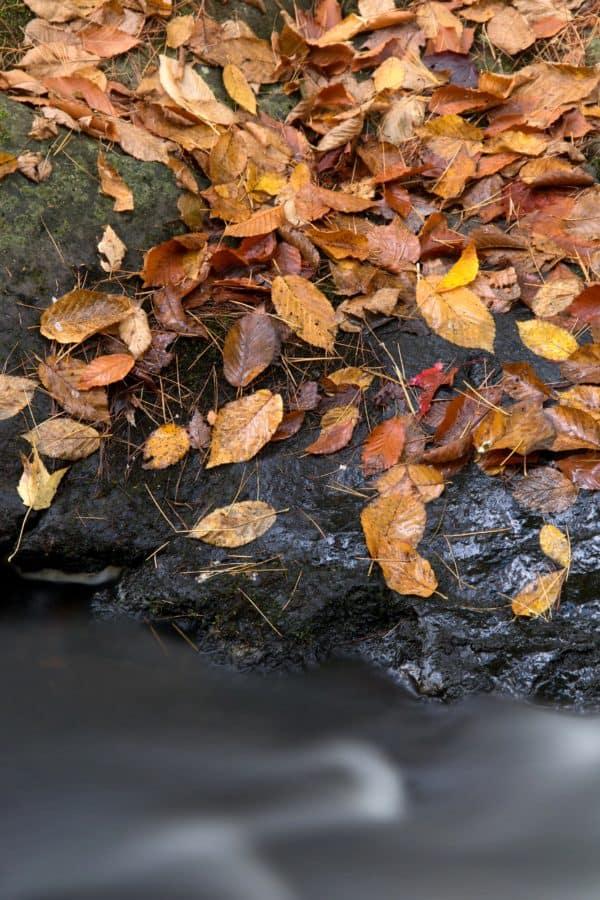 flore, nature, feuilles, bois, arbre, environnement, automne