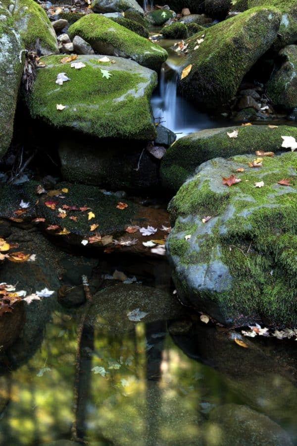 moss, river, water, aquatic, stream, tree, reflection, stone