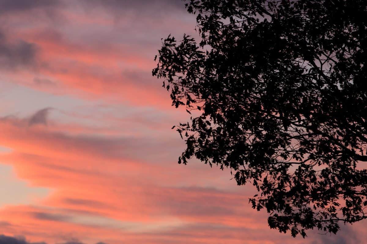 coucher de soleil, silhouette, ciel, paysage, aube, soleil, nature, arbre