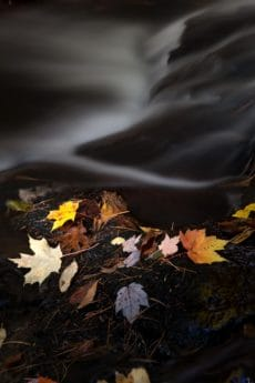 leaf, forest, moss, riverbank, river, autumn, ecology