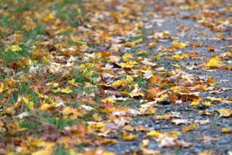 texture, leaf, nature, grass, road, ground
