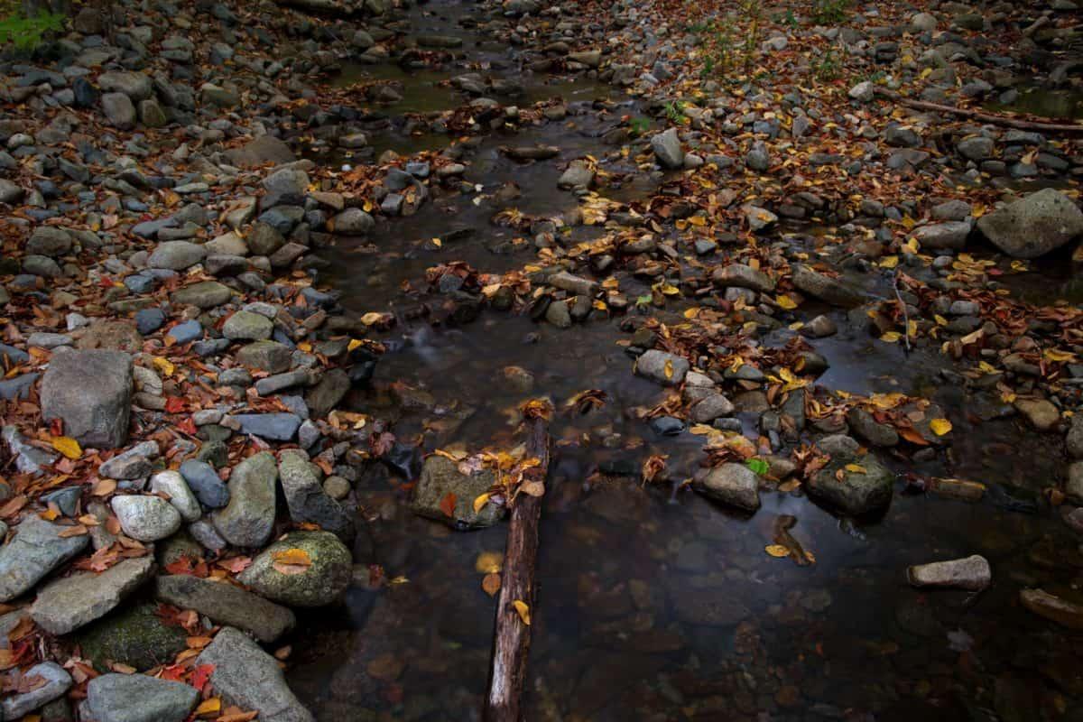 természet, levél, víz, ősz, árnyék, folyó, kültéri