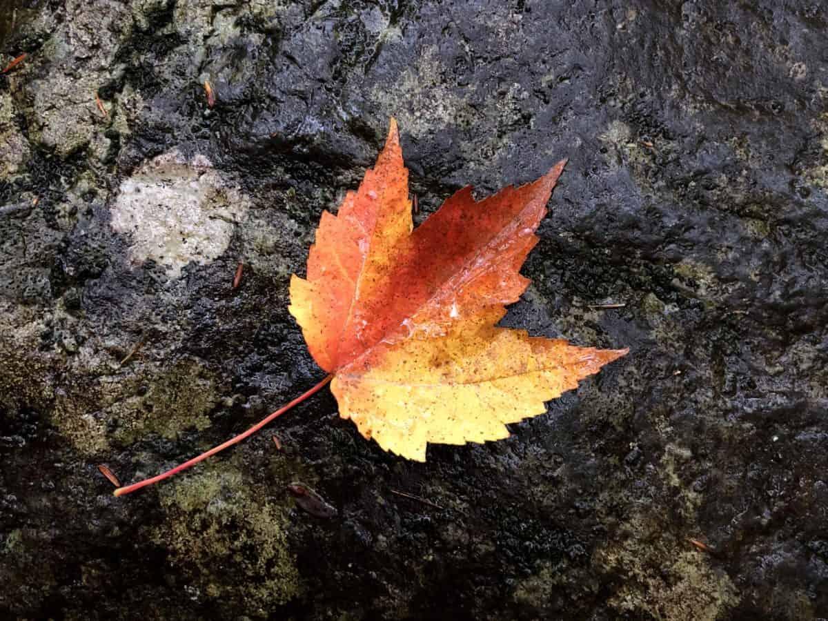 природа, листа, есенни, Открит, земята, през есента, камък, цветни