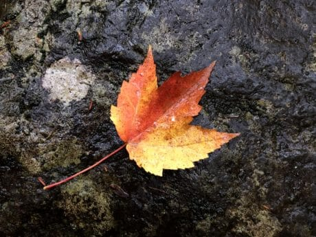 nature, leaf, autumn, outdoor, ground, autumn, stone, colorful