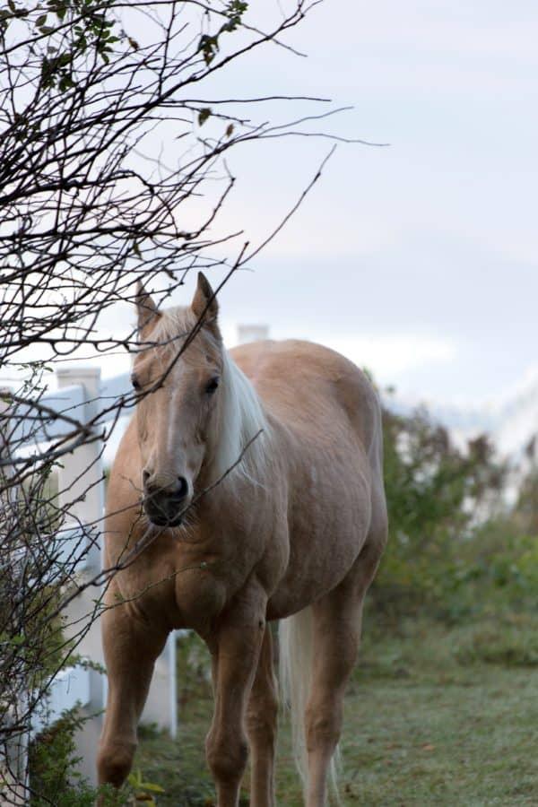 cavalerie, animal, cheval, chevaux, étalon, herbe, brown, champ