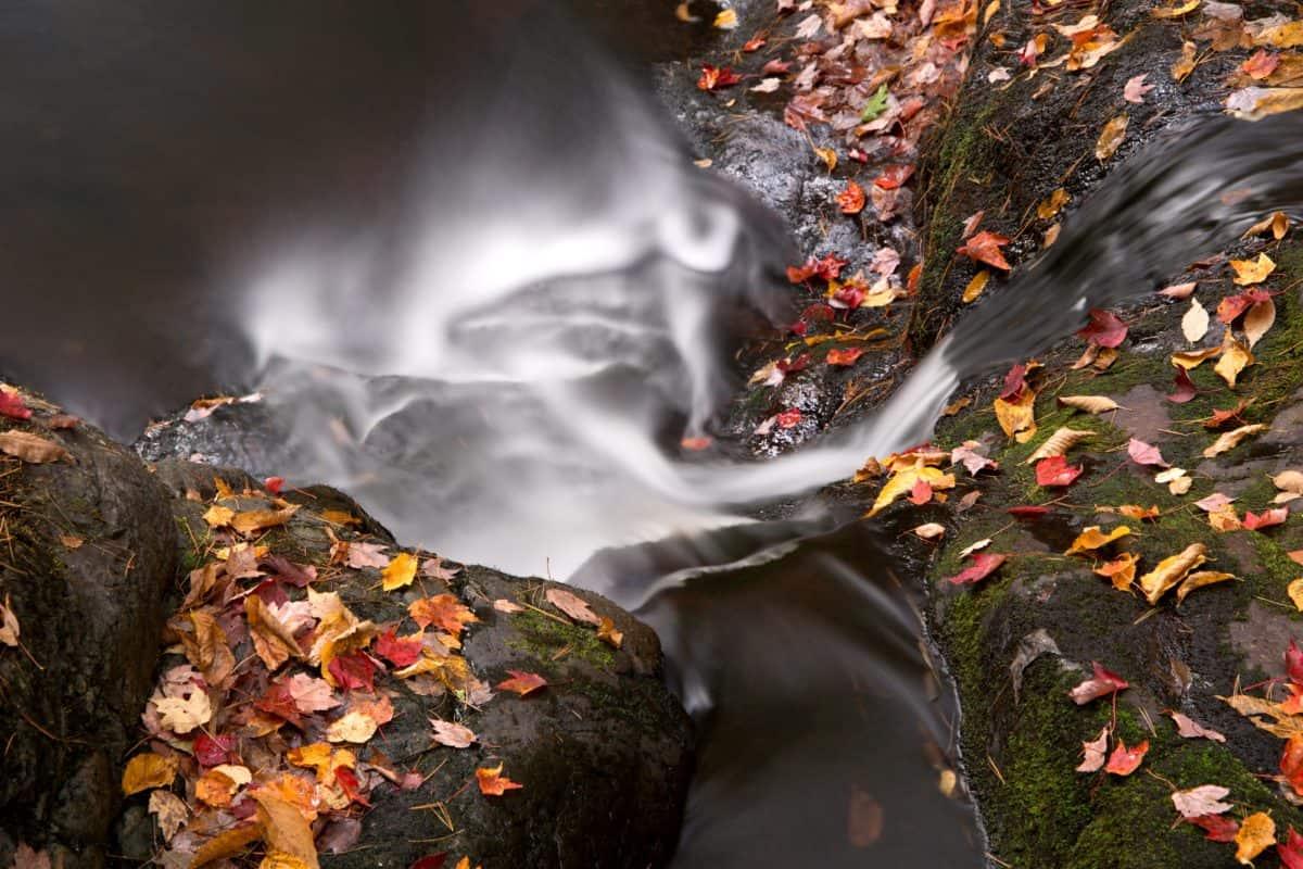 Blatt, Wasserfall, Fluss, Strom, Wasser, Stein, Wald, Umwelt