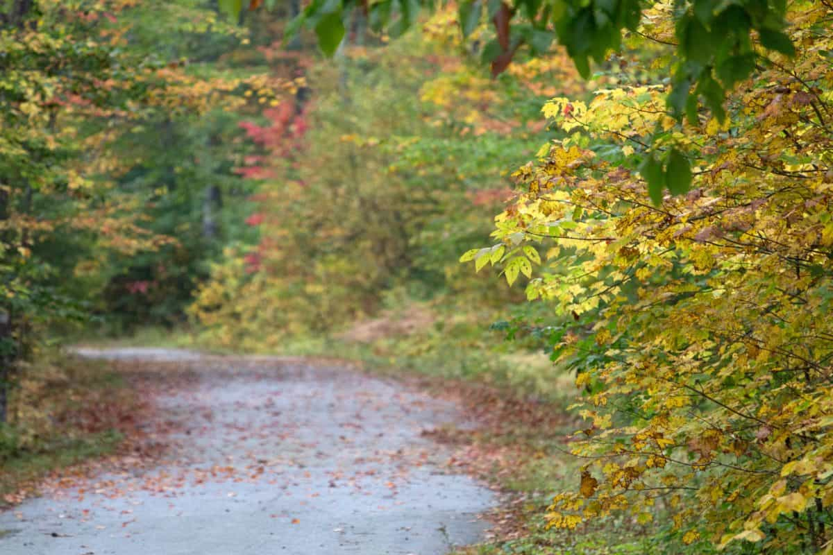 road, wood, landscape, nature, leaf, tree, autumn, forest, plant