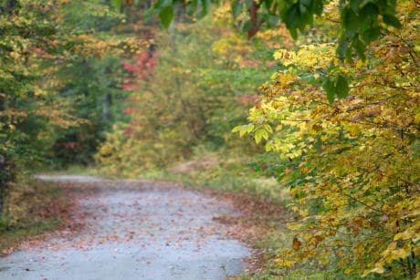 road, wood, landscape, nature, leaf, tree, autumn, forest, plant