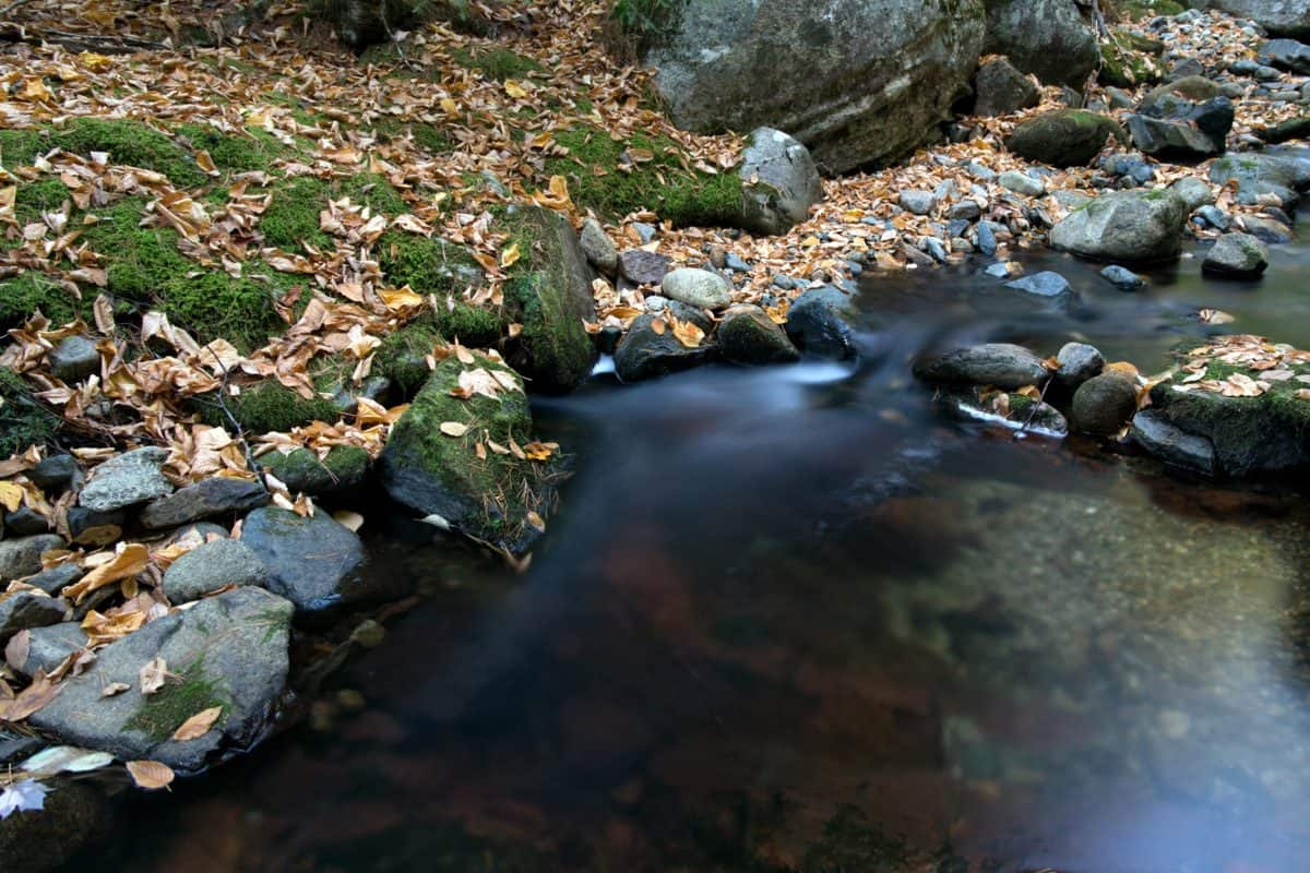 water, stream, leaf, river, nature, forest, landscape