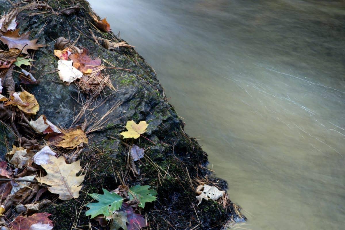 nature, water, leaf, moss, autumn, coast, autumn, coastline