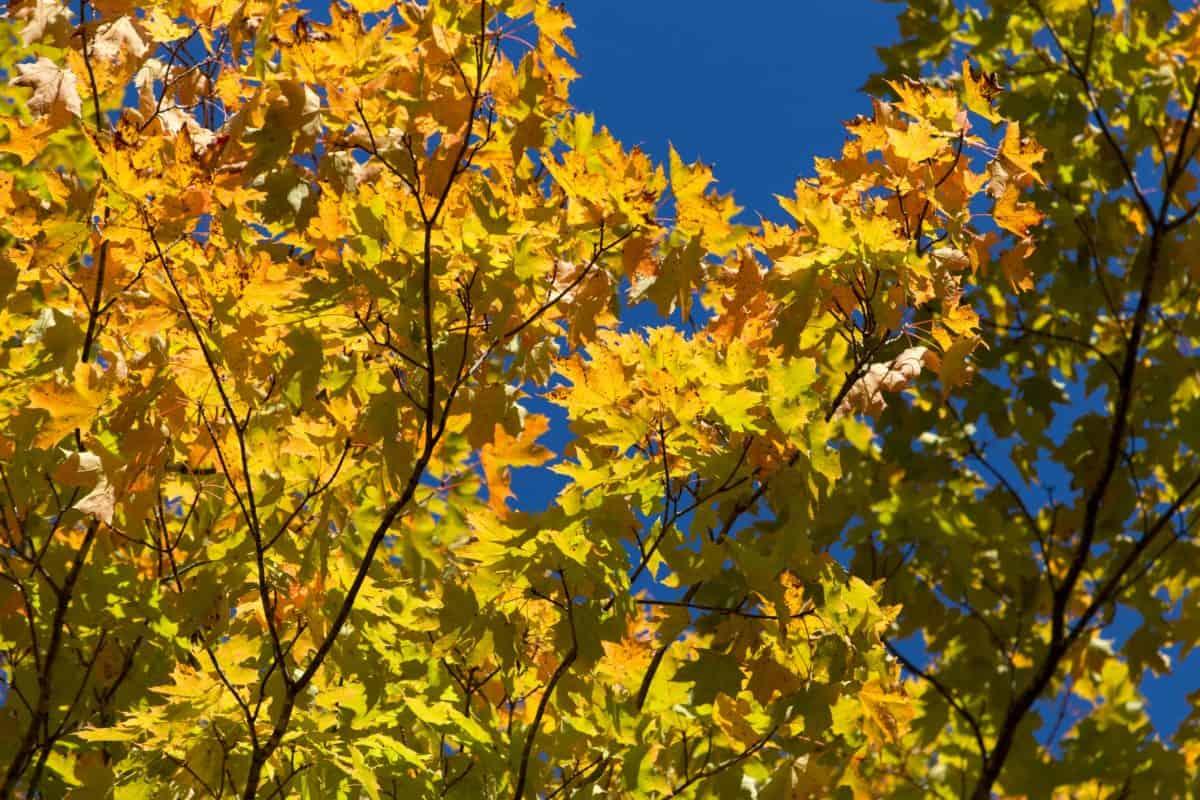 feuille, bois, arbre, nature, branche, plante, automne, forêt, feuillage
