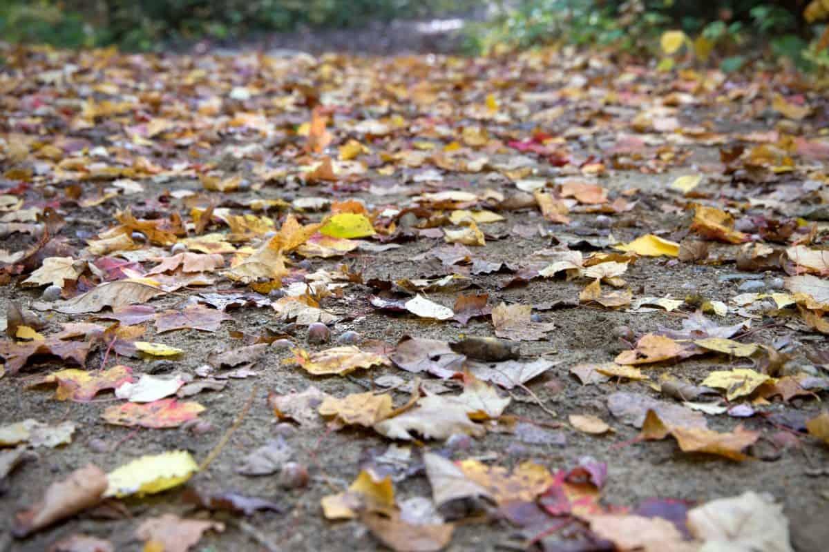 листа, текстура, природата, пътищата, земята