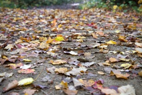 leaf, texture, nature, road, ground