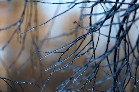 winter, dew, detail, nature, branch, forest, rain