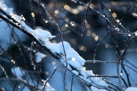 detail, nature, dawn, winter, snow, frost, branch, dew