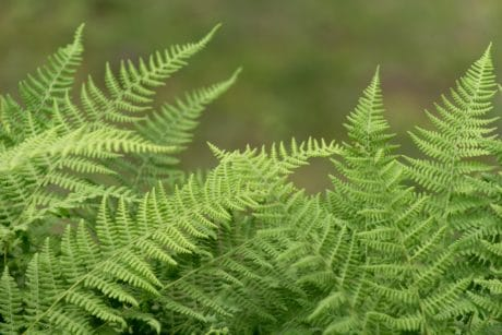 ecology, environment, fern, nature, leaf, summer, flora, plant