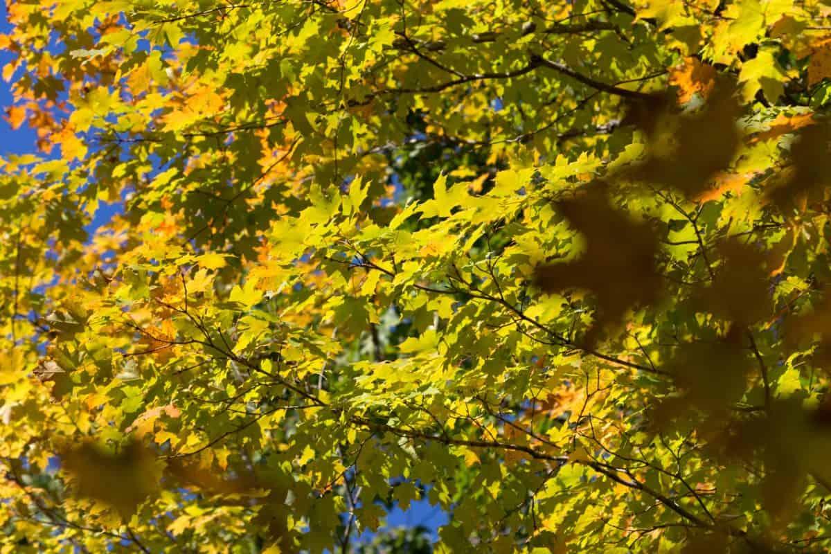 haara, metsä, puu, luonnosta, kasvi, puu, lehtiä ja maisema