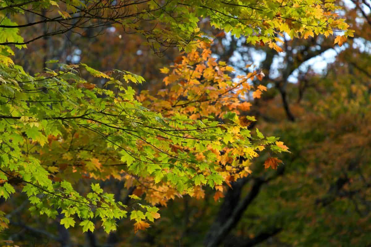 gỗ, cây, thiên nhiên, lá, mùa thu, cây, rừng,