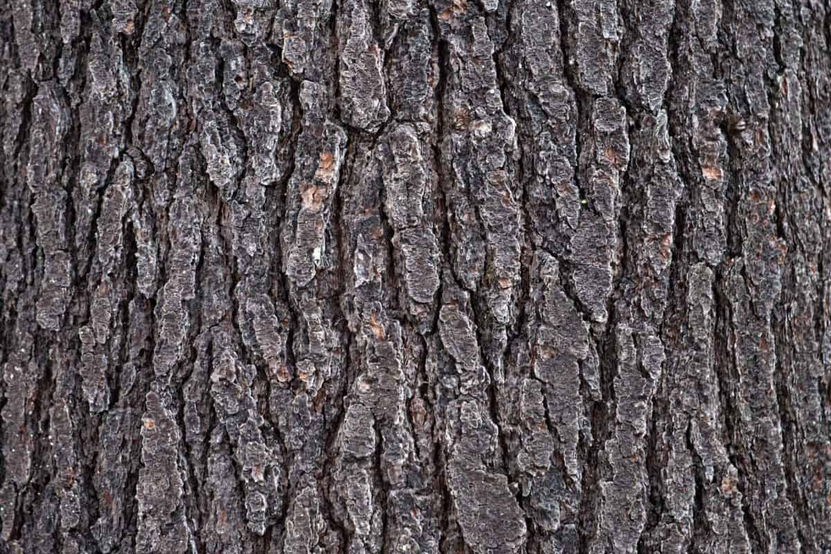 oak, nature, tree, wood, texture, pattern, bark, dry, outdoor
