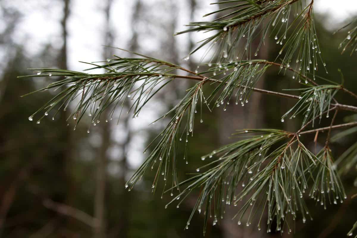 tree, flora, leaf, wood, nature, dew, rain, branch