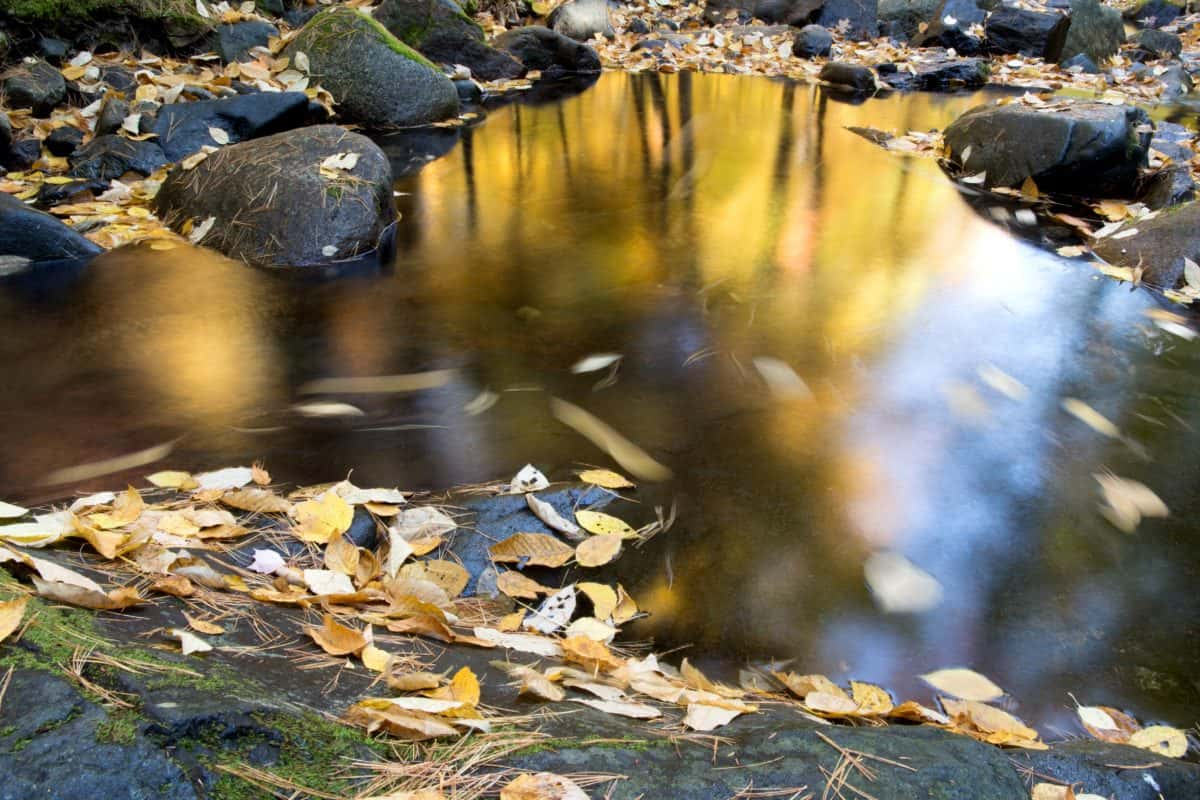 flusso, natura, riflessione, fiume, acqua, autunno