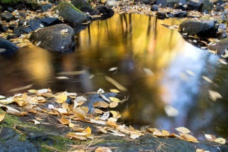 stream, nature, reflection, river, water, autumn