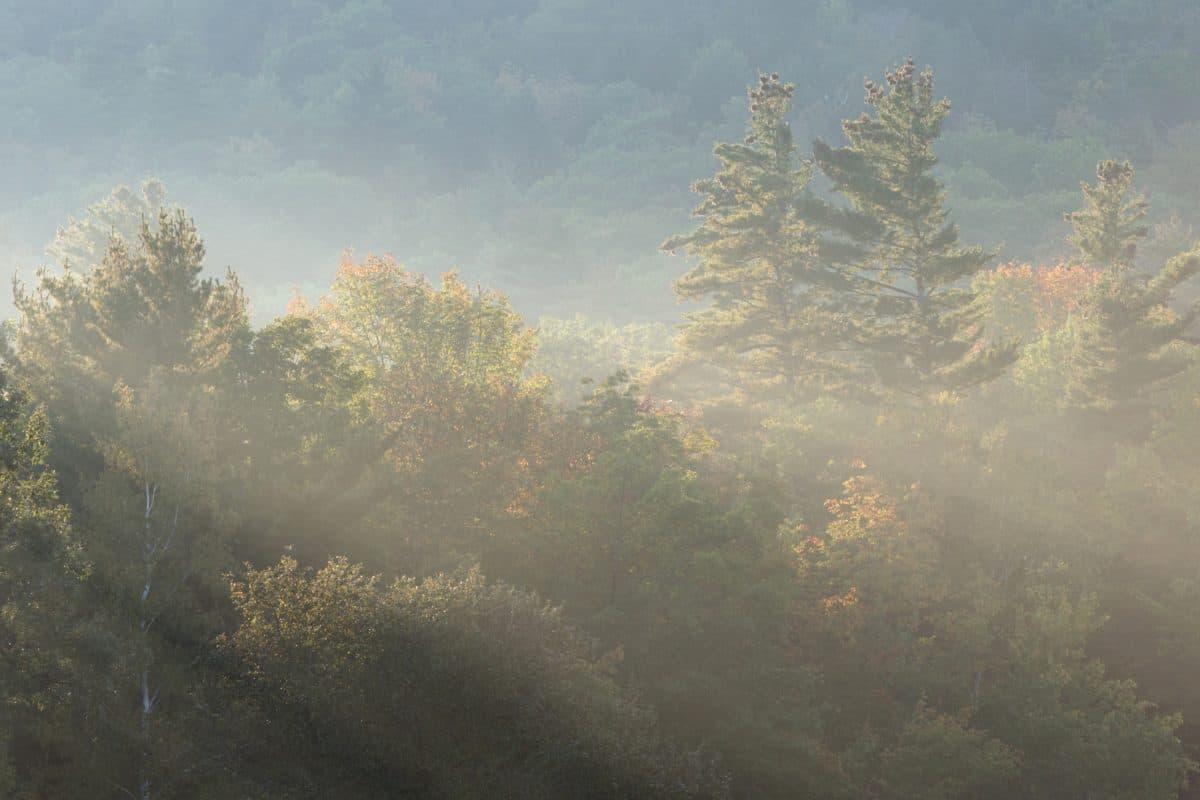 naturaleza, amanecer, árbol, paisaje, niebla, bosque, cielo, al aire libre