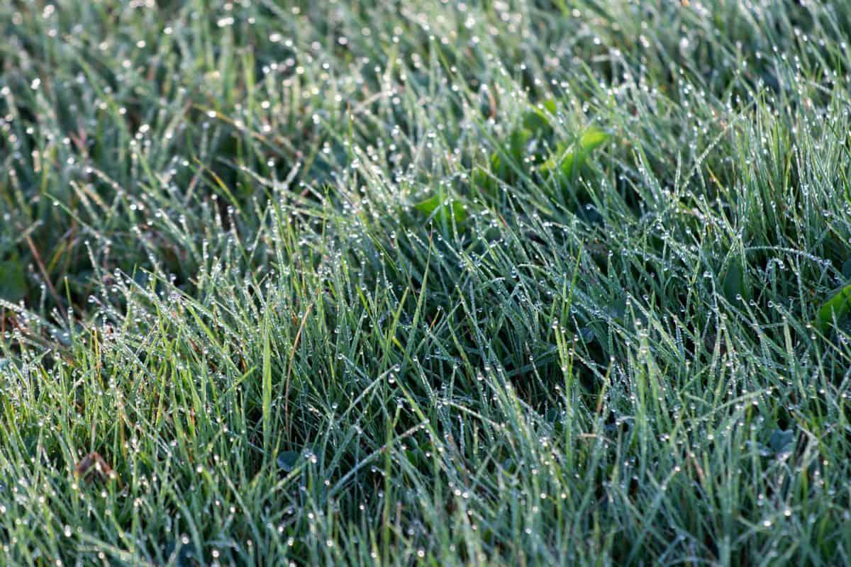 дъжд, детайл, листа, поле, тревата, флора, трева, околната среда, природата, растения
