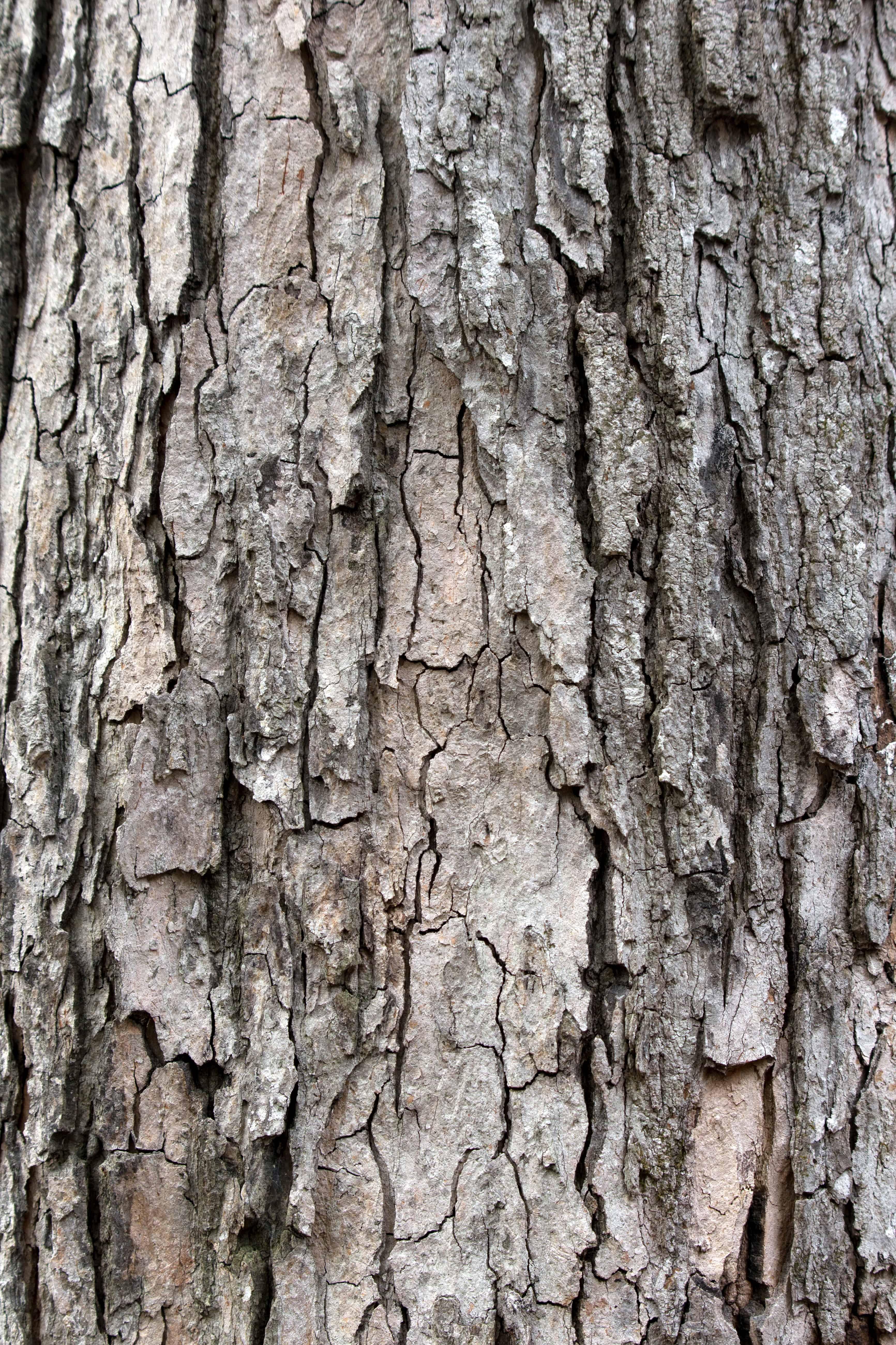 Dark Oak Wood Texture