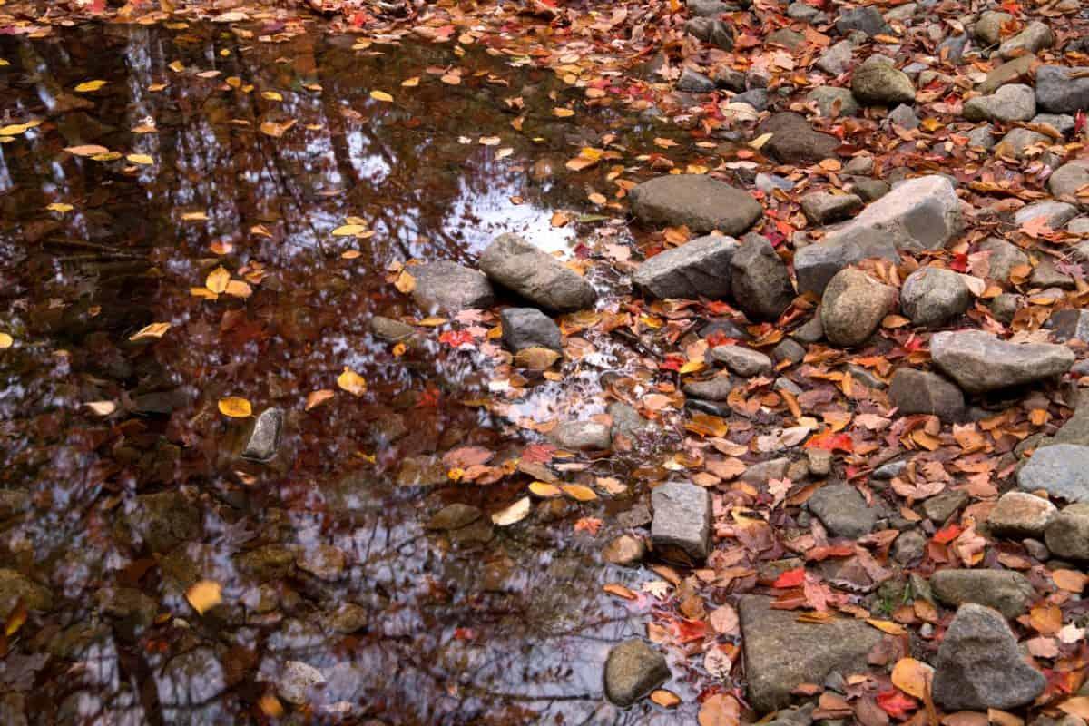 Natur, Stein, Wasser, Blatt, Textur, Herbst, im freien