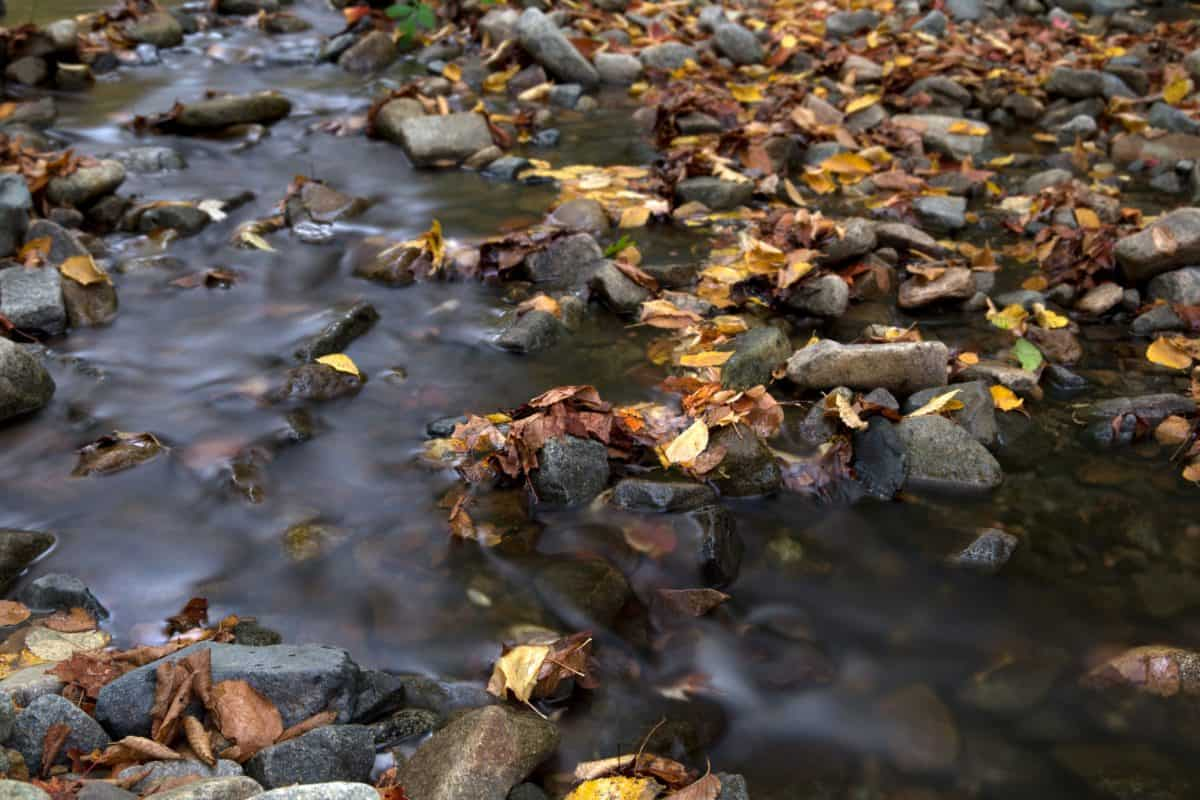 nature, stream, river, water, leaf, autumn, stone, riverbank